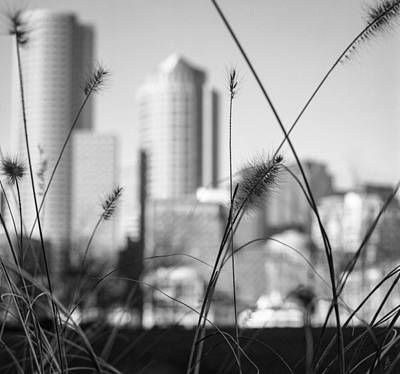 Photograph - Boston Skyline From Fan Pier Park by Patrice Bilesimo
