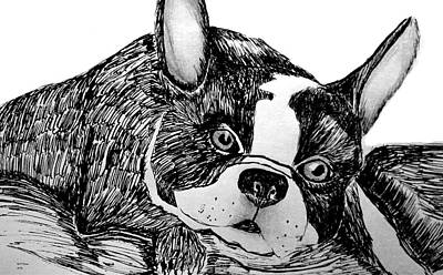 Drawing - Boston Terrier 15-01a by Maria Urso