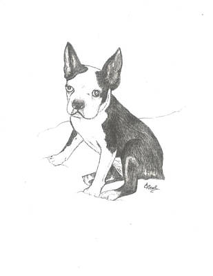 Drawing - Boston Terrier by Carol Neal