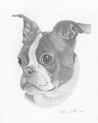 Drawing - Boston Terrier Juno by Dave Nevue