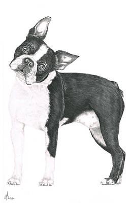 Boston Terrier Art Print by Murphy Elliott