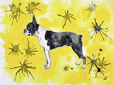 Painting - Boston Terrier On Yellow by Zaira Dzhaubaeva