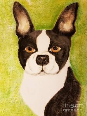 Pastel - Boston Terrier -  Pastels by Maria Urso