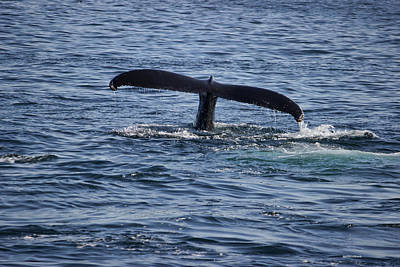 Photograph - The Whale Of A Tail by Roberta Byram