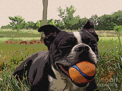 Boston Terrier Painting - Bostons Ball 3 by Michael Moore