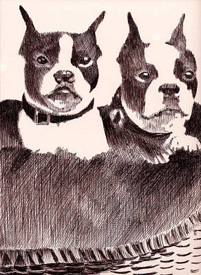 Robbi Musser Drawing - Bostons In A Basket by Robbi  Musser