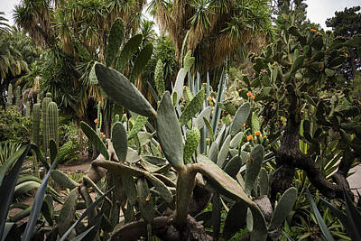 Botanic Garden Valencia Art Print by For Ninety One Days