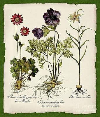 Torn Paper Painting - Botanica Nostalgia II Botanical Study by Tina Lavoie