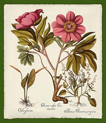 Torn Paper Painting - Botanica Nostalgia Iv Botanical Study by Tina Lavoie
