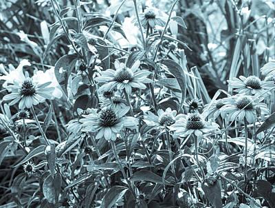 Photograph - Botanical Cyanotype Echinacea Flowers by Marianne Campolongo
