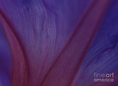 Photograph - Into Purple by John F Tsumas