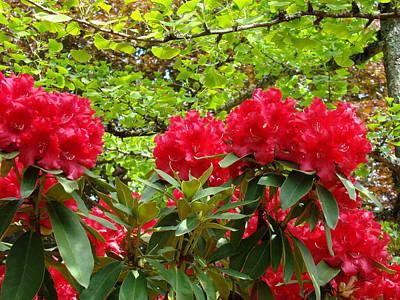 Botanical Garden Art Prints Red Rhodies Trees Baslee Troutman Art Print by Baslee Troutman
