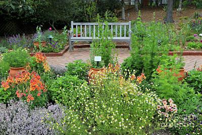 Photograph - Botanical Garden Bench by Carol Groenen