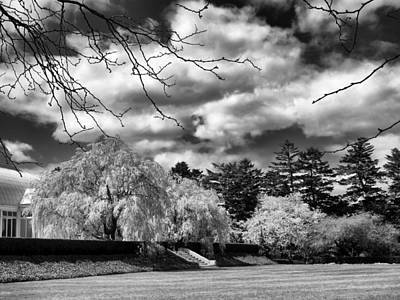Photograph - Botanical Garden Monochrome by Jessica Jenney