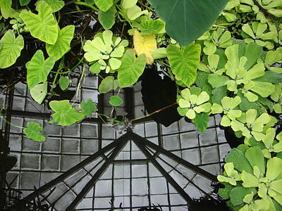 Lilly Pond Photograph - Botanical Illusions by Donna Blackhall