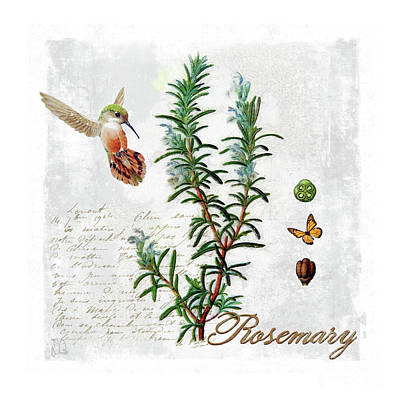 Botanical Illustration, Rosemary Herb Hummingbird Botany Art Print by Tina Lavoie