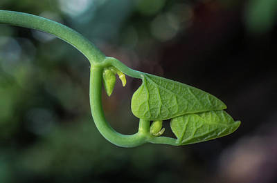 Photograph - Botanical Macro by Lilia D
