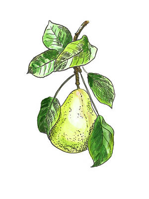 Painting - Botanical. Pear 1 by Masha Batkova