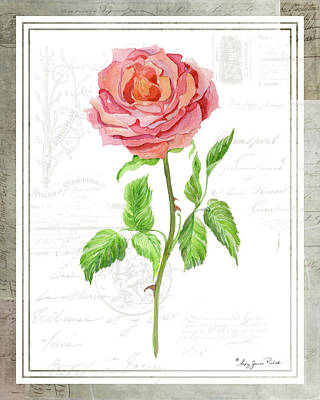Painting - Botanical Vintage Style Watercolor Floral 2 - Pink English Rose by Audrey Jeanne Roberts