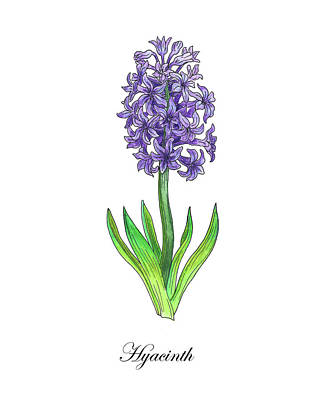 Hyacinths Wall Art - Painting - Botanical Watercolor Of Hyacinth Flower by Irina Sztukowski