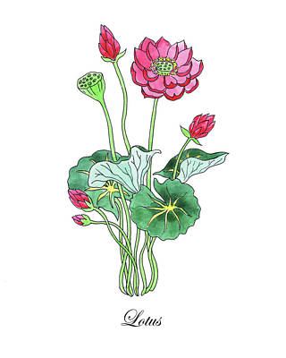 Lilies Royalty-Free and Rights-Managed Images - Botanical Watercolor Of Lotus Flower by Irina Sztukowski