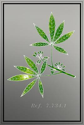 Beauty Digital Art - Botany 2 by Alberto RuiZ