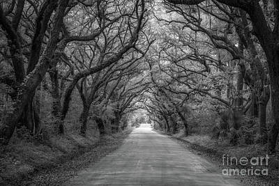 Angel Island State Park Photograph - Botany Bay Road Black And White by Michael Ver Sprill