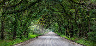 Botany Bay Photograph - Charleston - Botany Bay Road  by J Darrell Hutto