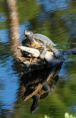 Photograph - Both Turtles Looking At Me by William Tasker