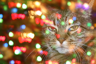 Bothered Christmas Cat Art Print by Susan Bryant