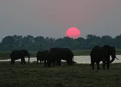 Photograph - Botswana Sunset by Jennifer Wheatley Wolf