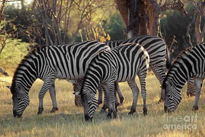 Photograph - Botswana_16-4 by Craig Lovell