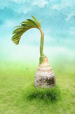 Bottle Palm Tree Art Print by Art Spectrum