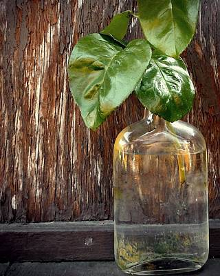 Photograph - Bottle With Green Leaves by Patricia Strand