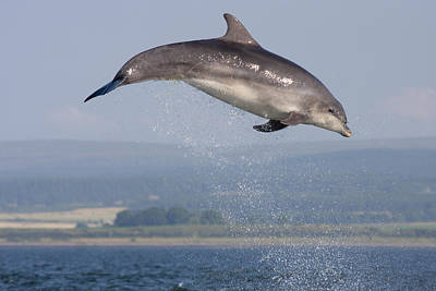 Bottlenose Dolphin - Scotland #3 Art Print