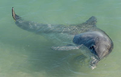 Photograph - Bottlenose Dolphin by Martin Capek