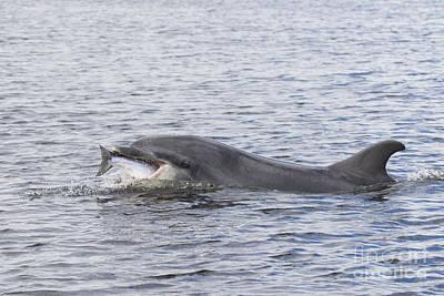 Photograph - Bottlenose Dolphin - Scotland  #23 by Karen Van Der Zijden