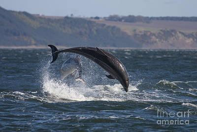 Photograph - Bottlenose Dolphins - Scotland  #25 by Karen Van Der Zijden