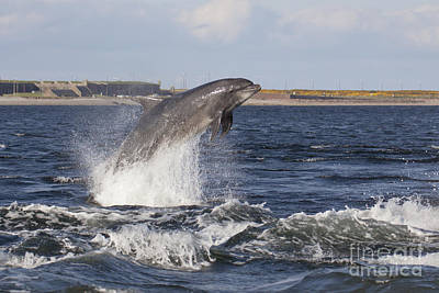 Photograph - Bottlenose Dolphin - Scotland  #26 by Karen Van Der Zijden