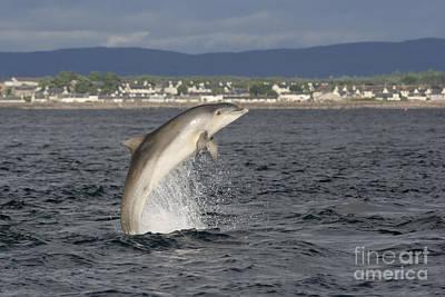 Photograph - Bottlenose Dolphin - Scotland  #29 by Karen Van Der Zijden