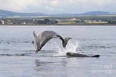 Photograph - Bottlenose Dolphins - Scotland #11 by Karen Van Der Zijden
