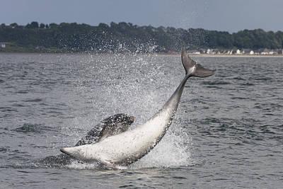 Photograph - Bottlenose Dolphins - Scotland #4 by Karen Van Der Zijden