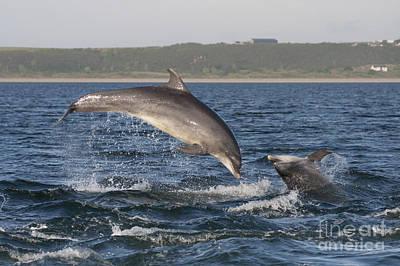 Photograph - Bottlenose Dolphins - Scotland #7 by Karen Van Der Zijden