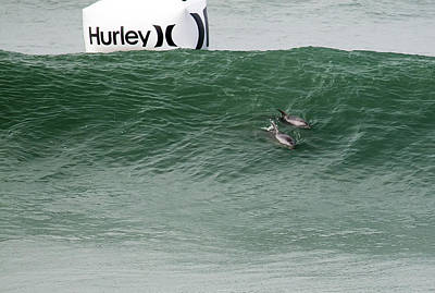 Photograph - Bottlenose Dolphins Making An Appearance At The Us Hurley Open S by Waterdancer