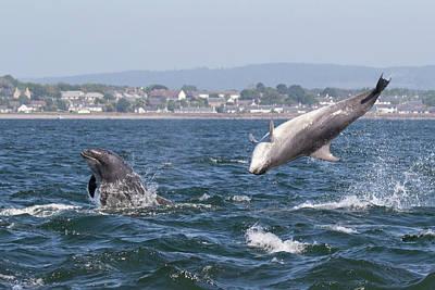 Art Print featuring the photograph Bottlenose Dolphins - Moray Firth Scotland #45 by Karen Van Der Zijden
