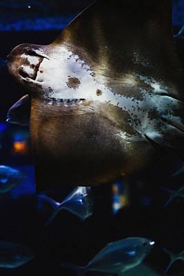 Aquatic Life Mixed Media - Bottom Of A Ray Fish by Pati Photography