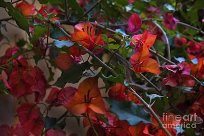 Bougainvillea Leaves Photograph - Bougainvillea At Joe's Secret Garden by Al Bourassa