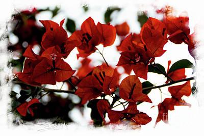 Bougainvillea Leaves Photograph - Bougainvillea At Joe's Secret Garden II by Al Bourassa