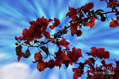 Photograph - Bougainvillea At Joe's Secret Garden Iv by Al Bourassa