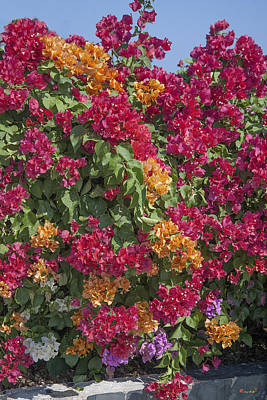 Photograph - Bougainvillea Dthcb0053 by Gerry Gantt